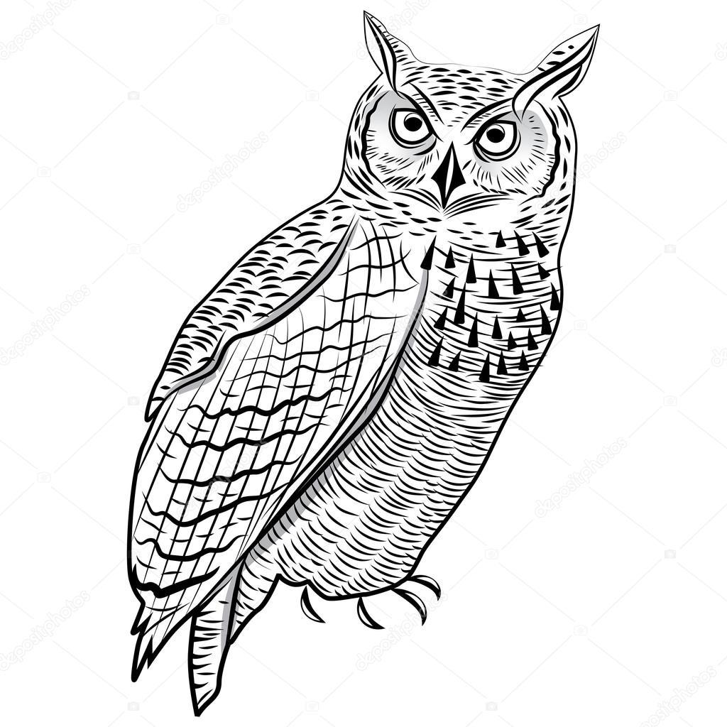 Sowa Birdn Głowa Symbol Maskotka Lub Godło Projekt Logo