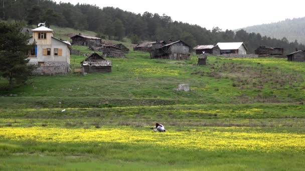 Girl photographing flowers in forest of the old village houses. Yellow flowers on little meadow. Woman with long hair takes photos. Photographer wooden house cottage meadowwold pasture steppe plateaus plateau tableland lowland plain background 4K