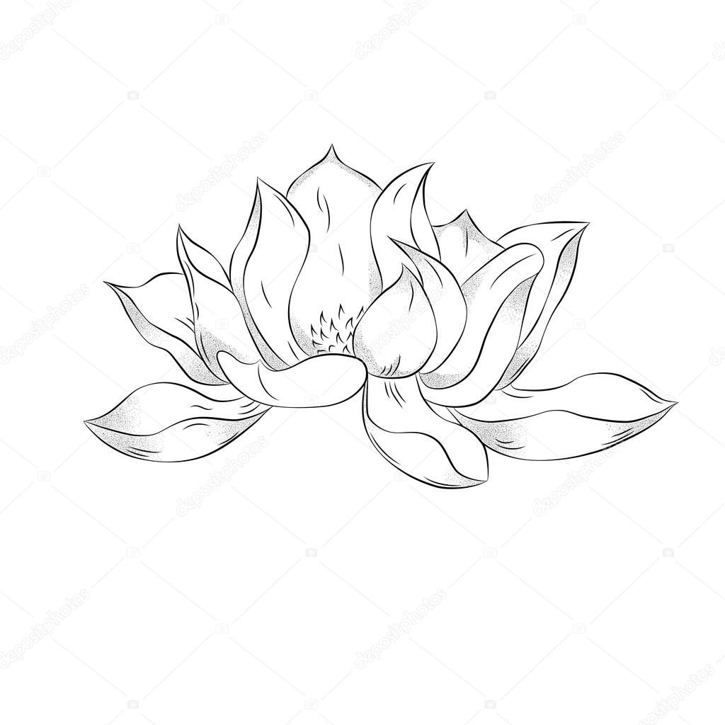 Lotus flower hand drawn illustration with stipple effect vinta lotus flower hand drawn illustration with stipple effect vinta stock vector mightylinksfo