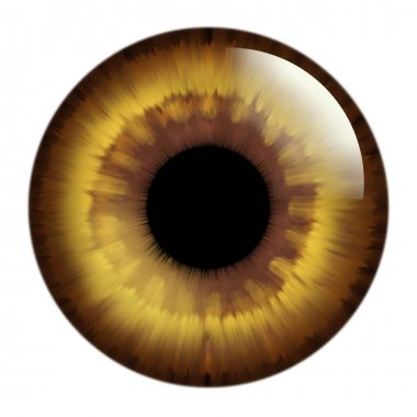 Backgrounds with eye. Green and brown eyes