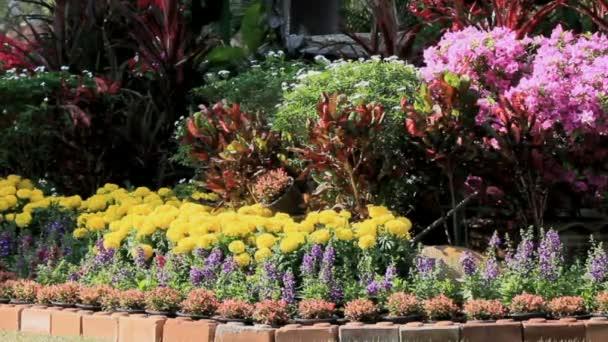Virágot a kertben, Hd vdo.