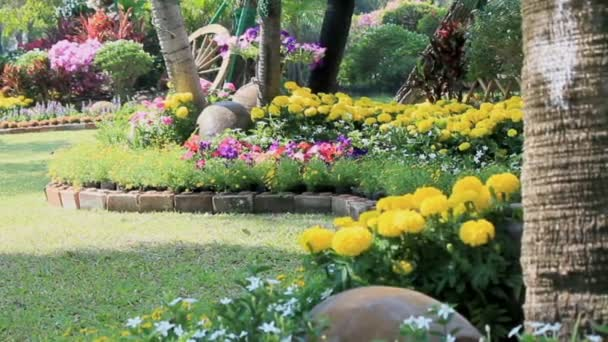 Flowers In The Garden Hd Vdo Stock Video C Moccabunny 115438234