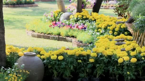 Blumen im Garten, hd vdo.