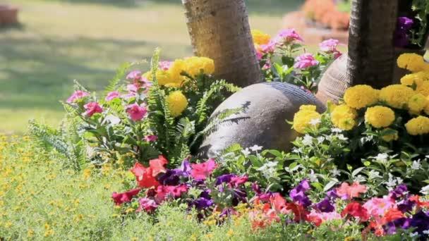 Flowers in the garden, HD vdo.