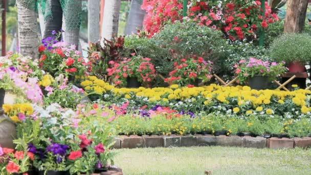 Květiny v zahradě, Hd vdo.