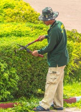 Gardener trimming plants.