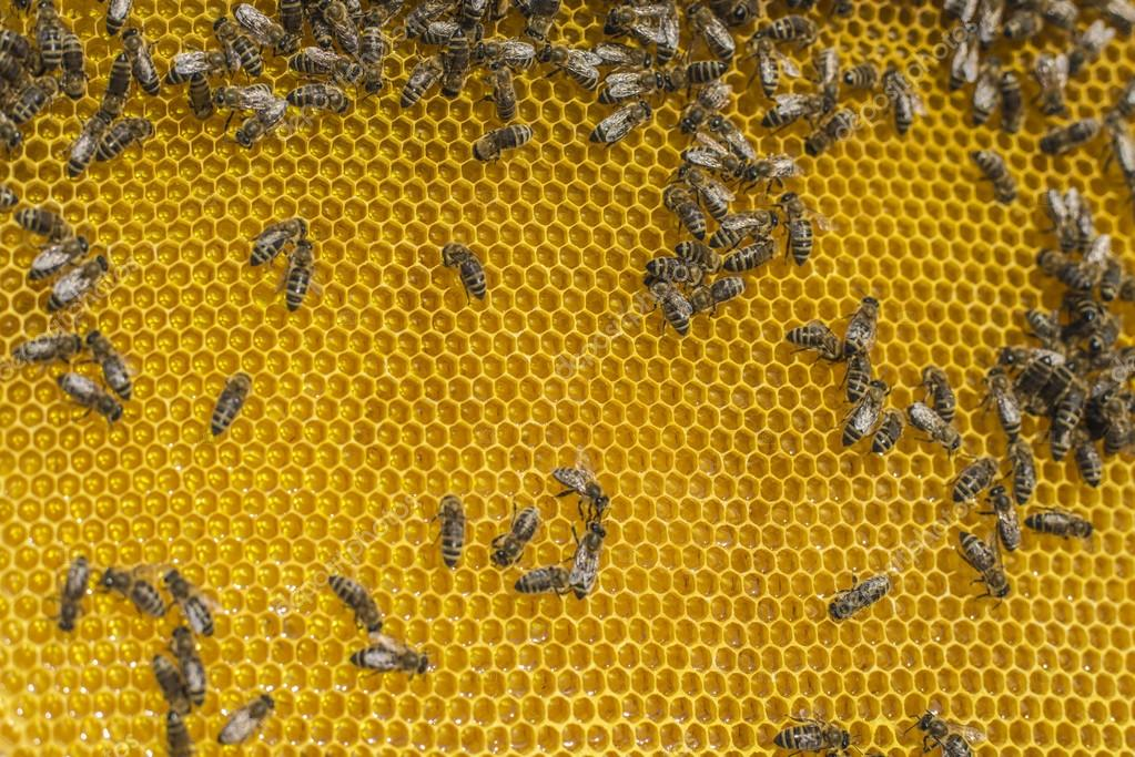 Beekeeping tool.Horizontal shoot.