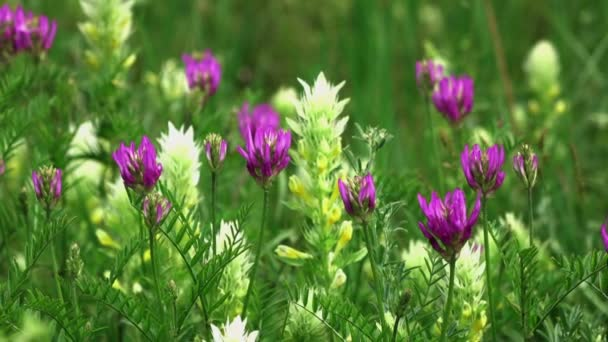 Beautiful pink flowers on a green background