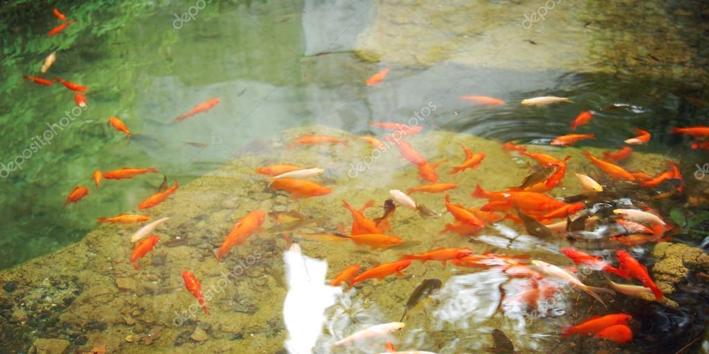 Laghetto artificiale con pesci rossi per il relax tonica for Riproduzione pesci rossi in laghetto