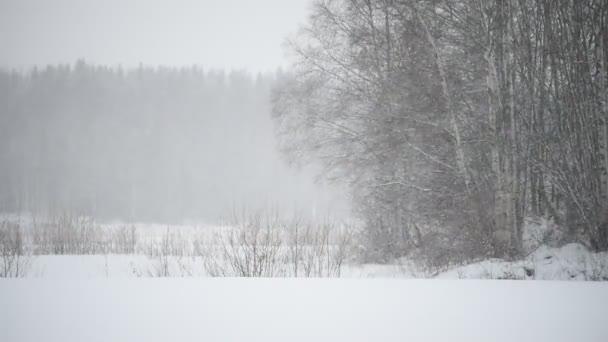Winterlandschaft draußen auf dem Land, wenn der Schnee dicht unter den Bäumen auf einem Feld fällt