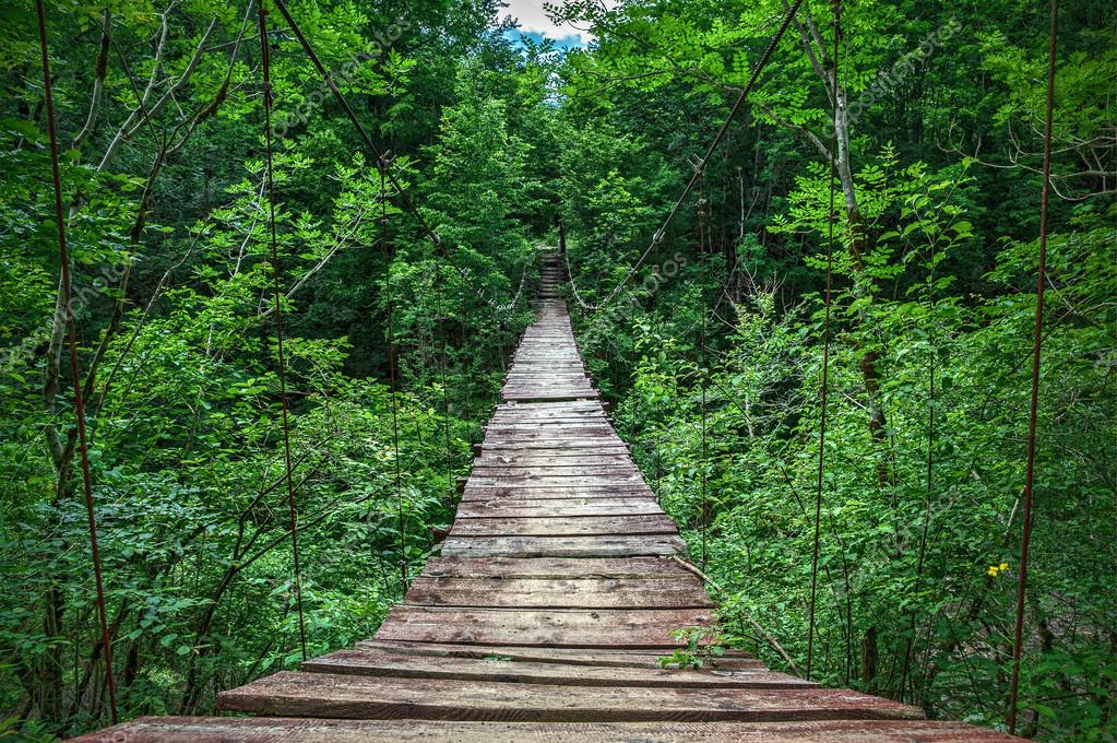 Suspension bridge in the forest