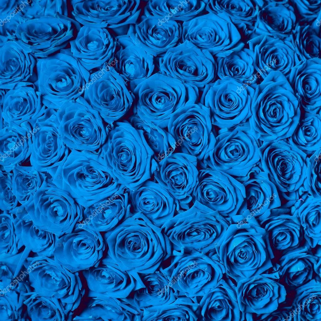 Hermosas Rosas Azules Fotos De Stock Baranovevgenii 69439161