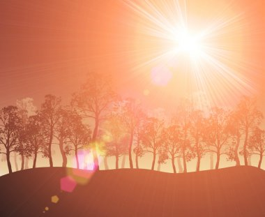 Trees sunflare