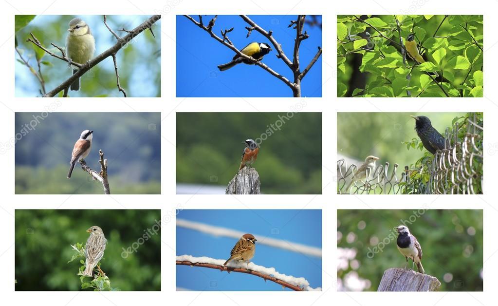 Μεγάλο πουλί συλλογή