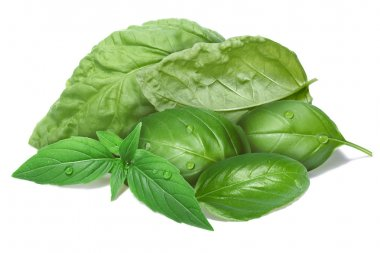 Basil leaves, different cultivars