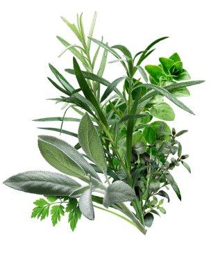 Herbes de Provence (combination of herbs)