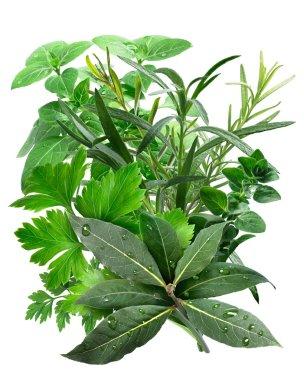 Mediterranean Herbs isolated