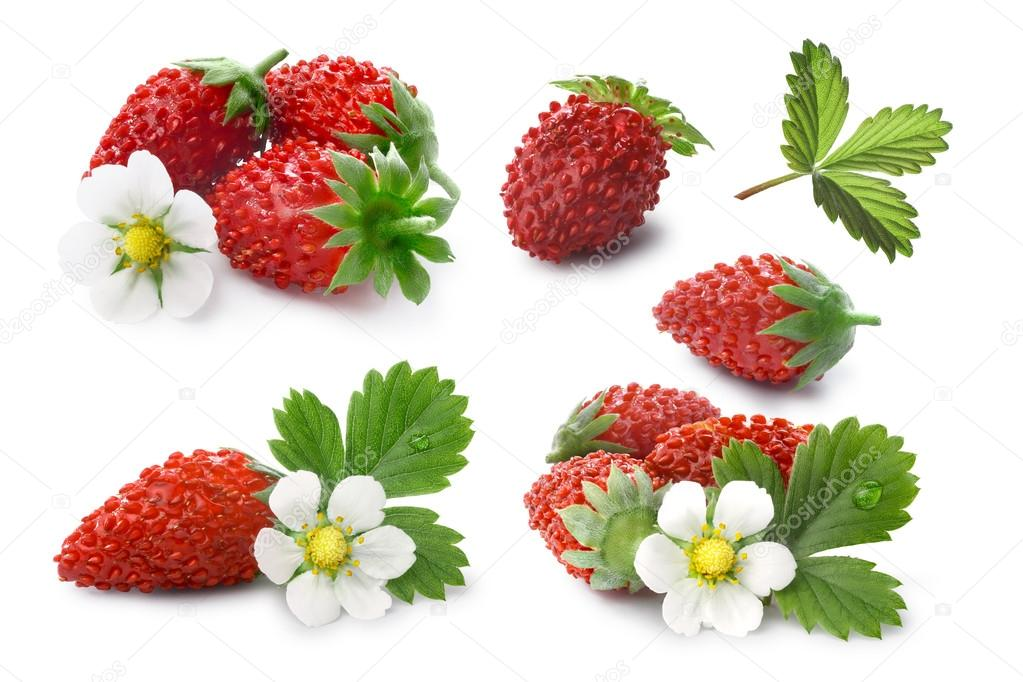 Set of Alpine strawberries (Fragaria vesca), clipping paths