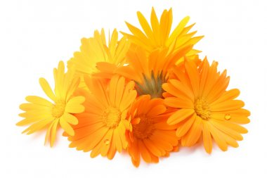 Calendula officinalis flowers, clipping paths