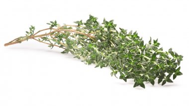 Thyme (Thymus vulgaris), clipping path