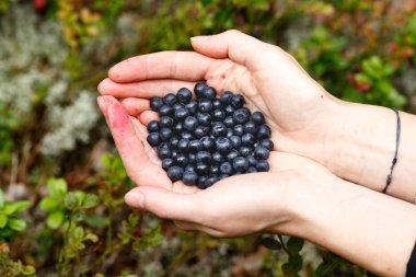 Handful of bilberries