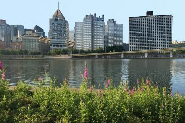 Pittsburgh skyline with flowers in front