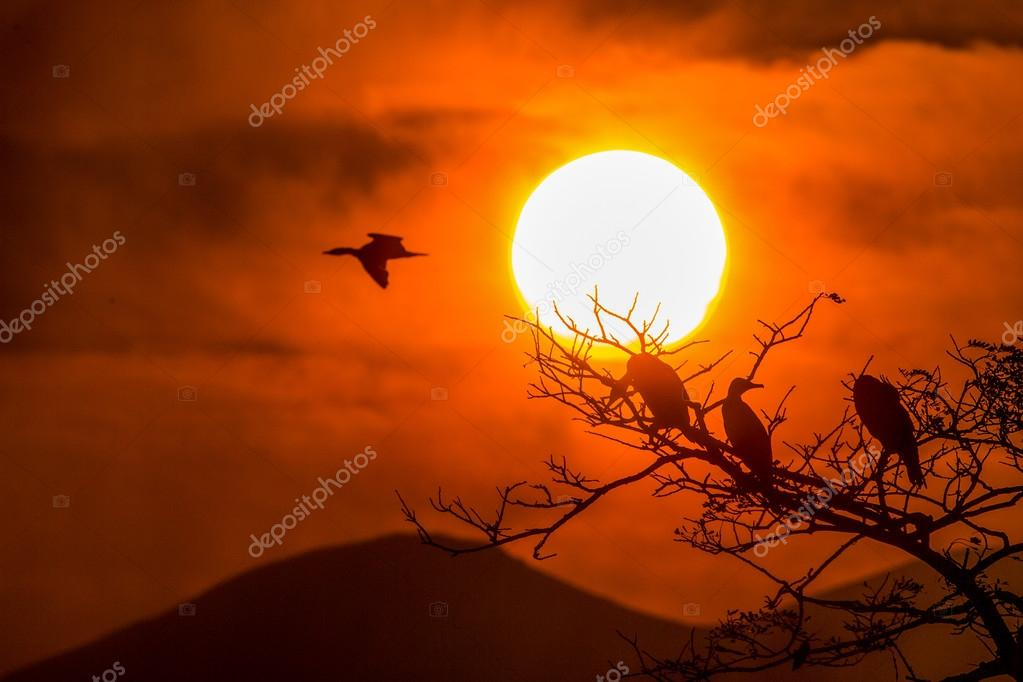 Silhouette Of Great Cormorant and Tree with Sunrise - color tone tuned