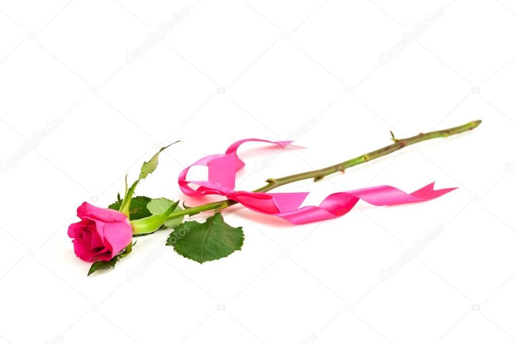 Single rose with pink ribbon
