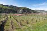 Wachau Valley im Frühjahr