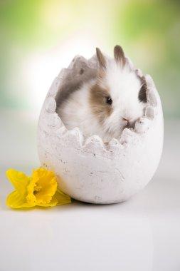 Bunny in egg, flowers