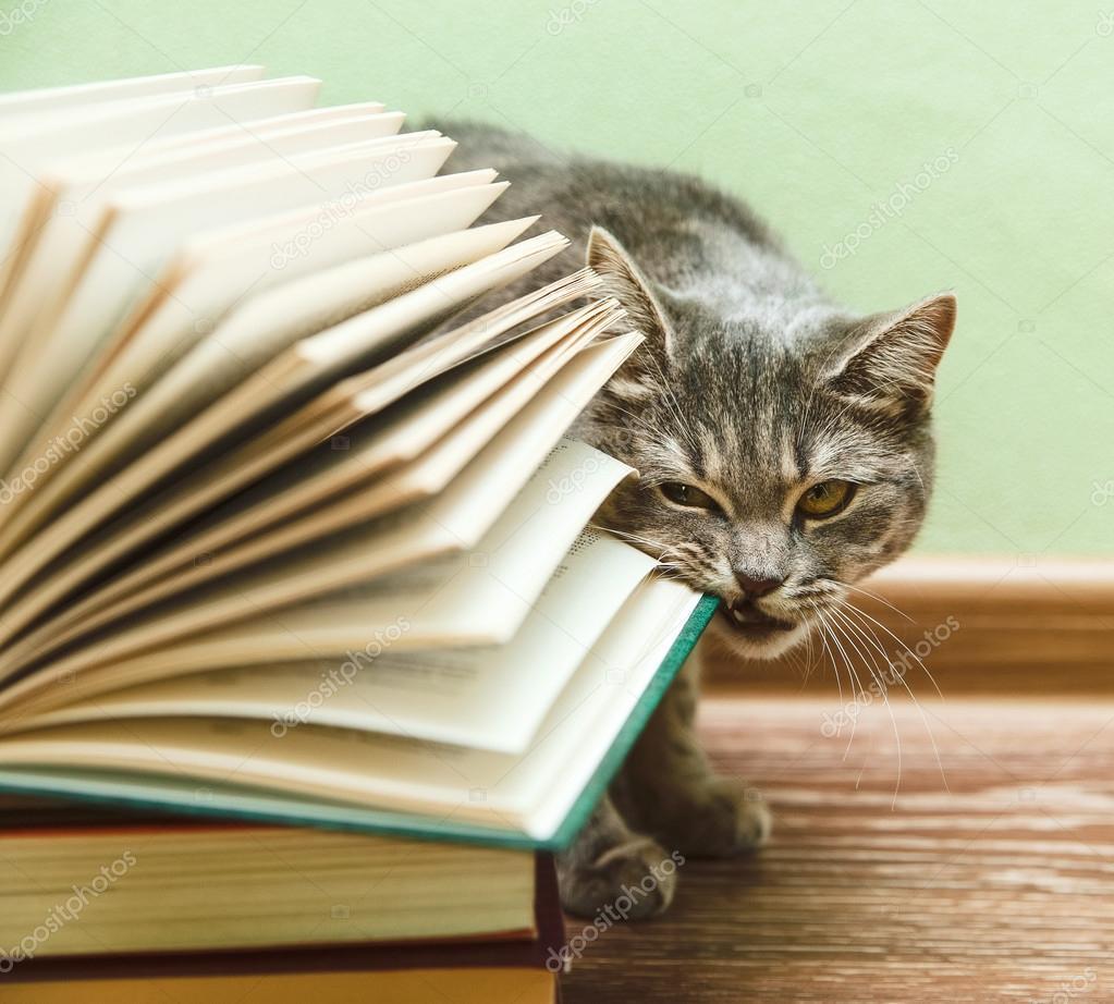 Смешные книги про котов скачать