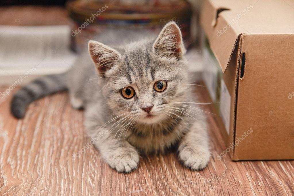playful little kitten sitting next to the brown box