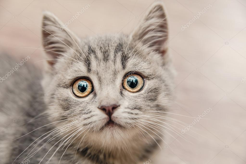 portrait of a beautiful little kitten with a touching look