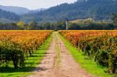 Vidéken a Napa Valley Vineyard látképe