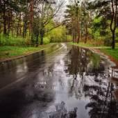 Strada nella foresta con la riflessione di alberi