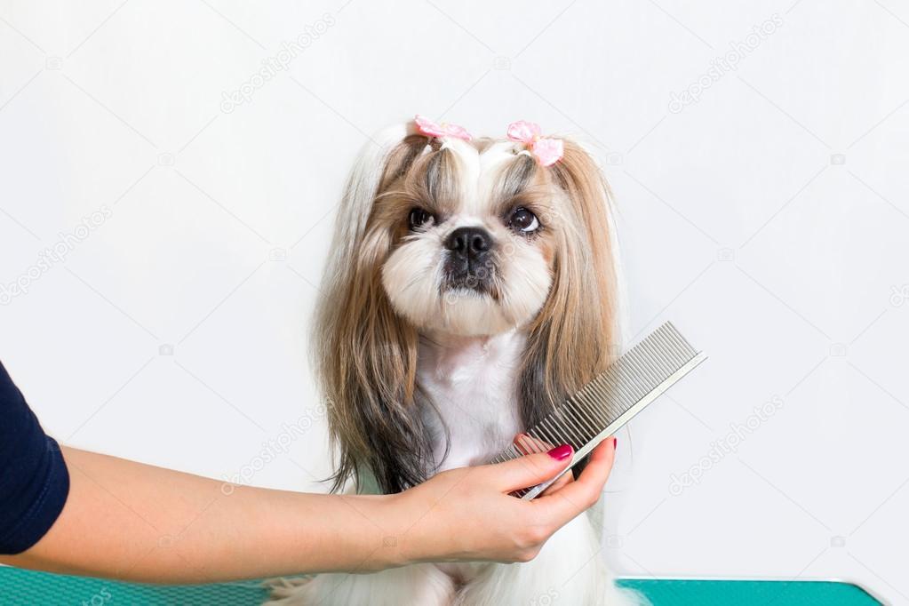 Resultado de imagem para groomer de cachorro