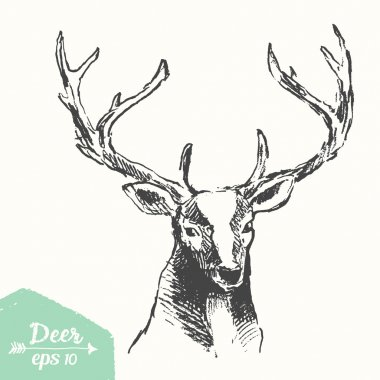 Sketch of a deer head, vintage illustration, hand drawn, sketch stock vector