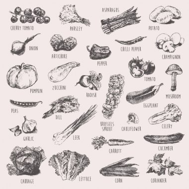 Collection of hand drawn vegetables, high detailed, vector illustration, sketch, engraved style