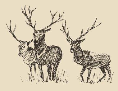 Hand drawn Deers sketch