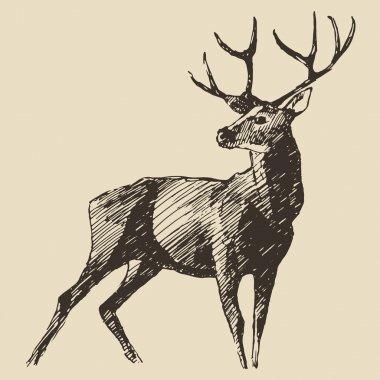 hand drawn deer sketch
