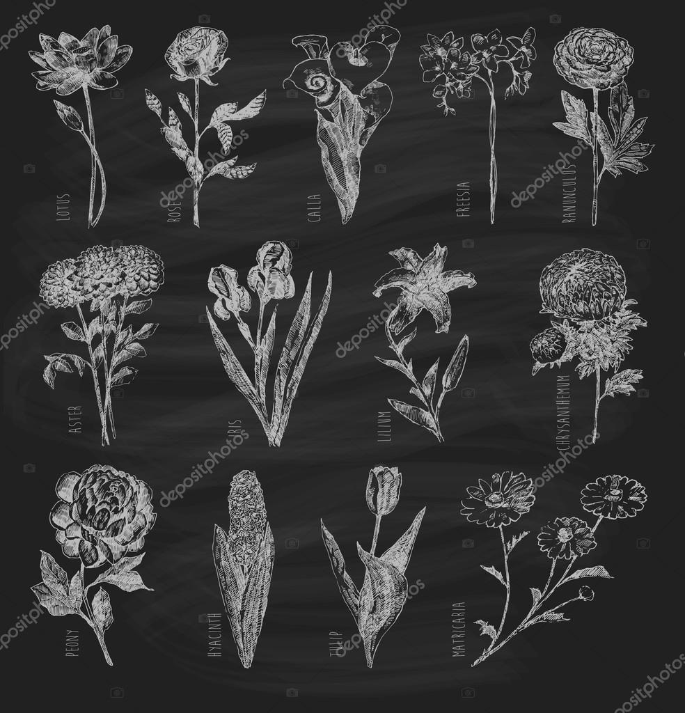 Trendy set hand drawn flowers on chalkboard