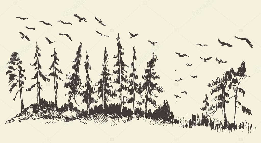 Hand drawn landscape fir forest migratory birds