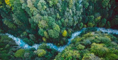 Aerial view of a river and forest in Georgia