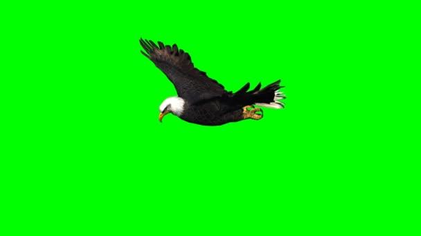 Sas, 3 - zöld képernyő siklik