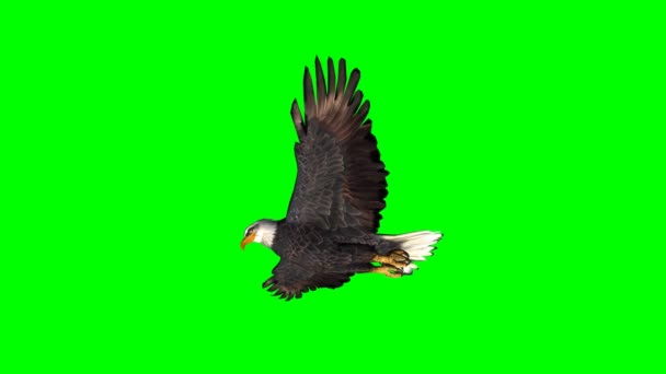 Adler im Gleitflug 2 - grüne Scheibe
