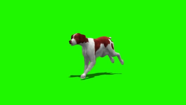 Dog runs - 3 different views - green screen 1