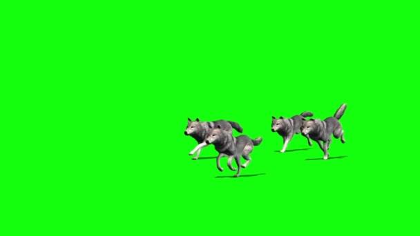 Vlci - malá skupina projde - 4 různá zobrazení