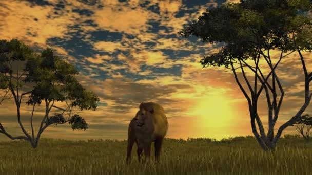 A sunset nagy oroszlán