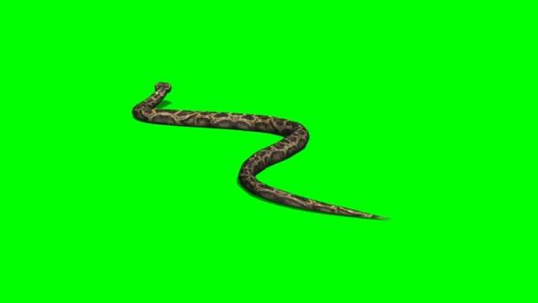 Python had procházení