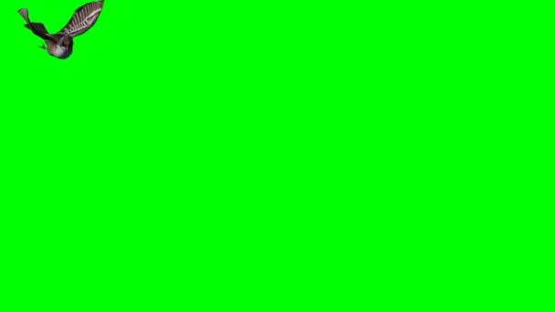 Sperling fliegt und landet - grüne Leinwand